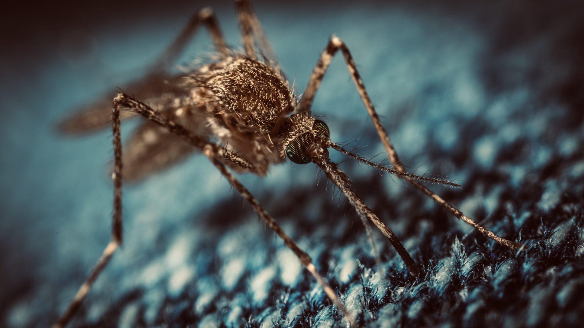 Walria muggenskitje